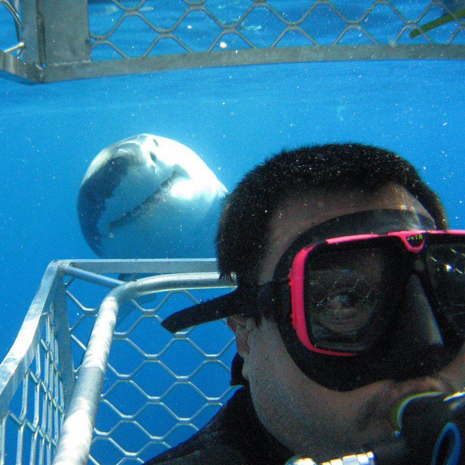Requin-Australie-Nager
