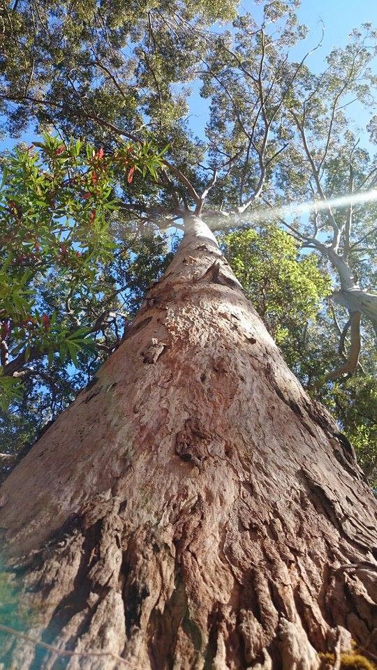 Quel arbre !