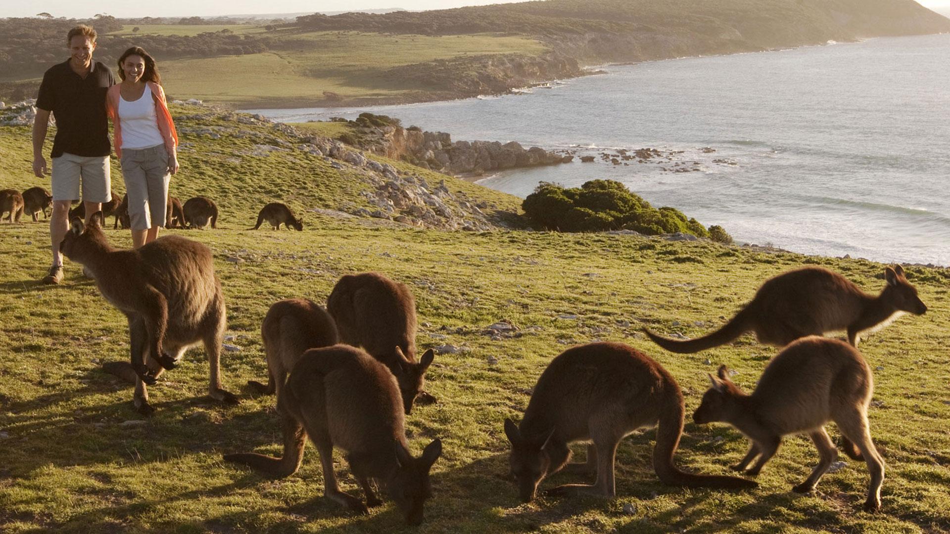 Kangaroo Island South Australia Attractions