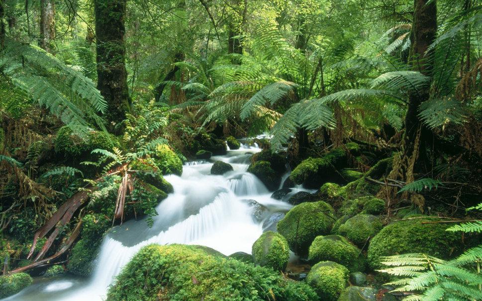yarra-ranges-national-park