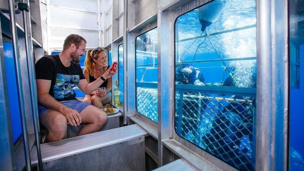 Australie requin aquarium
