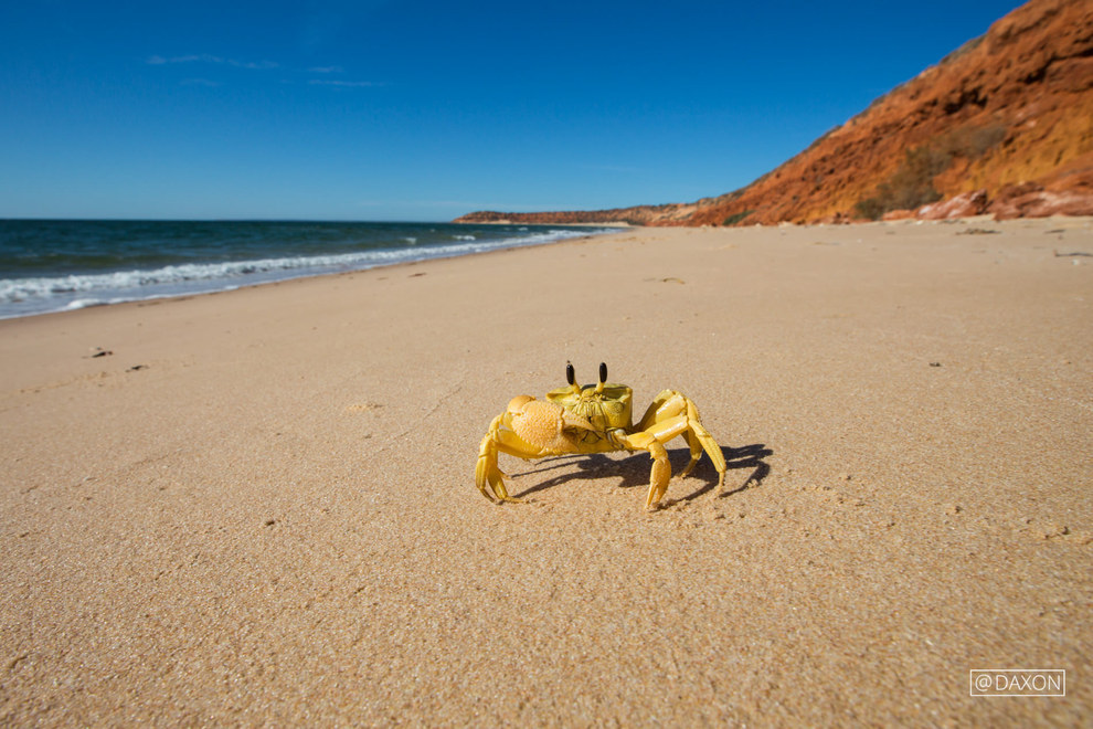 Western Australia 8