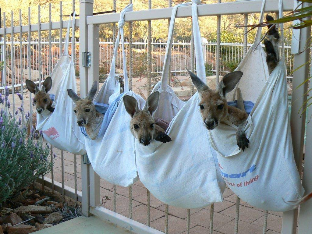 Kangaroo Sanctuary The Kangaroo Sanctuary...