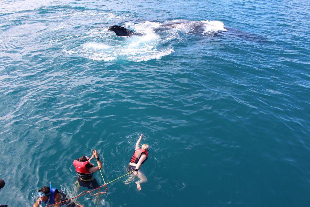 Baleines à Hervey Bay