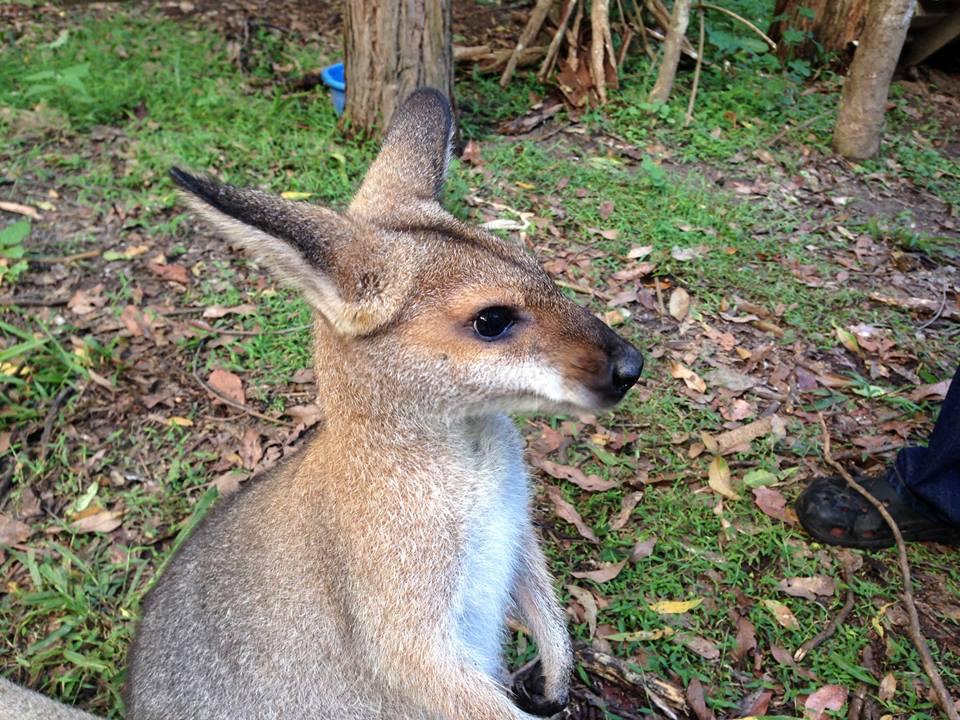 refuge-animaux-Australie2