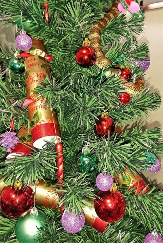 Serpent en Australie, ils adorent les fêtes et se cachent dans les sapins Noël