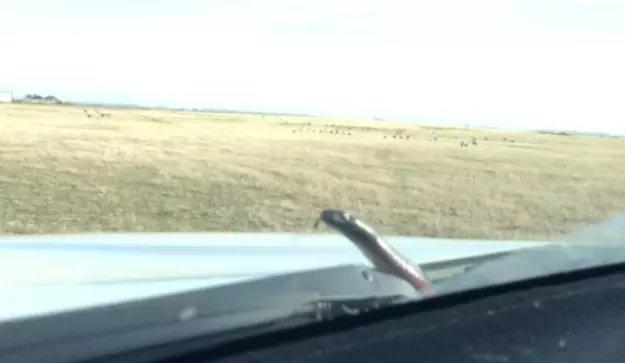 Serpent en Australie, en Van durant unroad trip