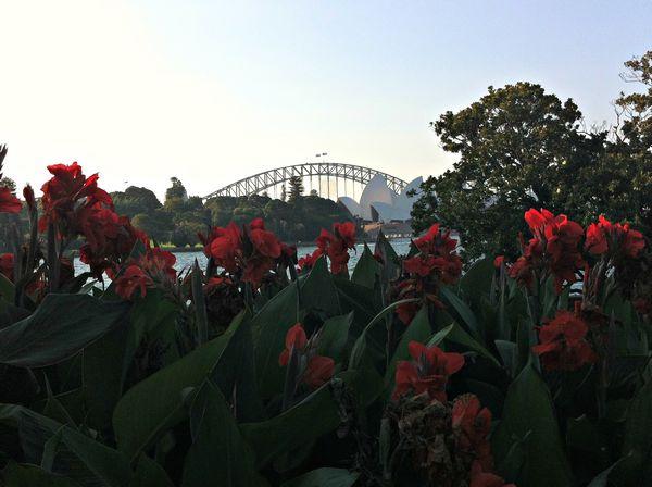 Le botanic gardens de Sydney