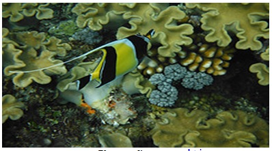 grande_barriere_corail_australie
