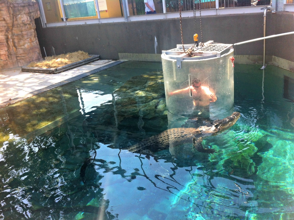 Dans une cage pour observer un crocodile à Darwin an Australie