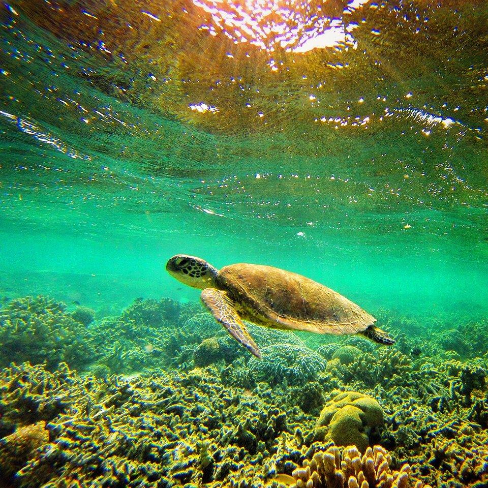 Australie Photo Nature