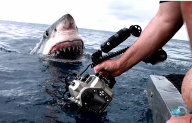 Requin Australie