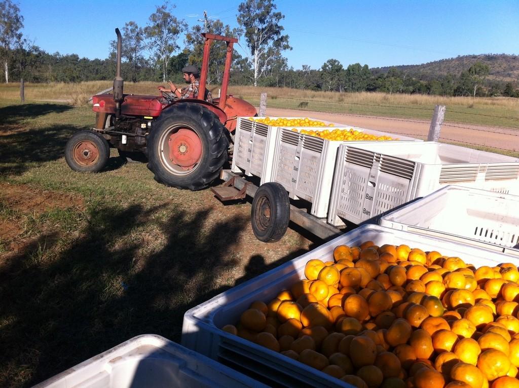 backpakcer australie fruit