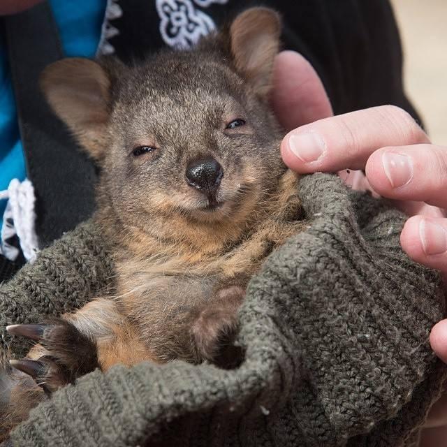 Tasman National Park Australie
