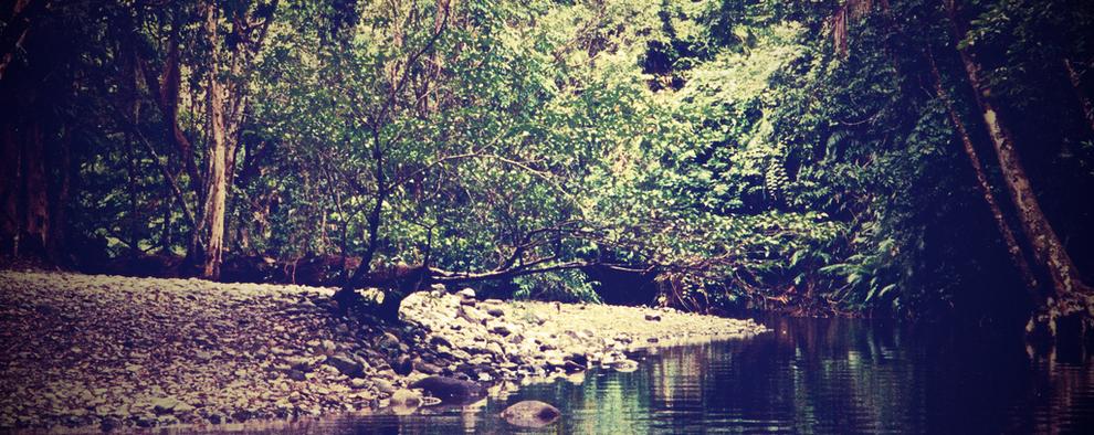 Daintree Rainforest Australie