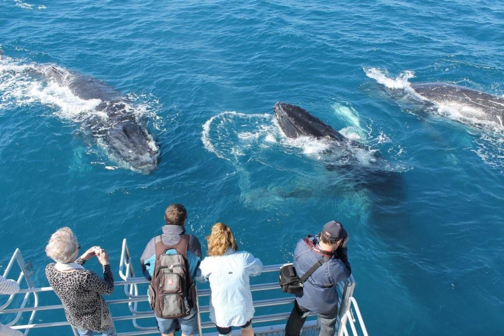 Hervey Bay Baleine