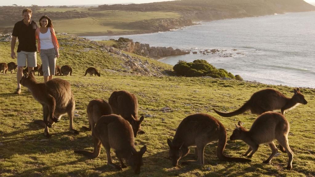 Kangaroo-Island Australie