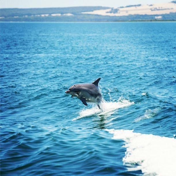 Nager avec les dauphins australie 2