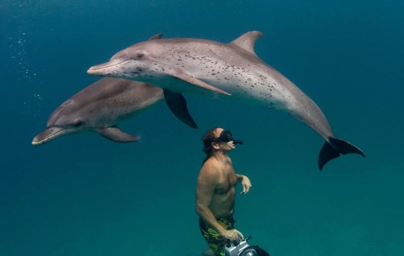 Nager requin baleine Australie