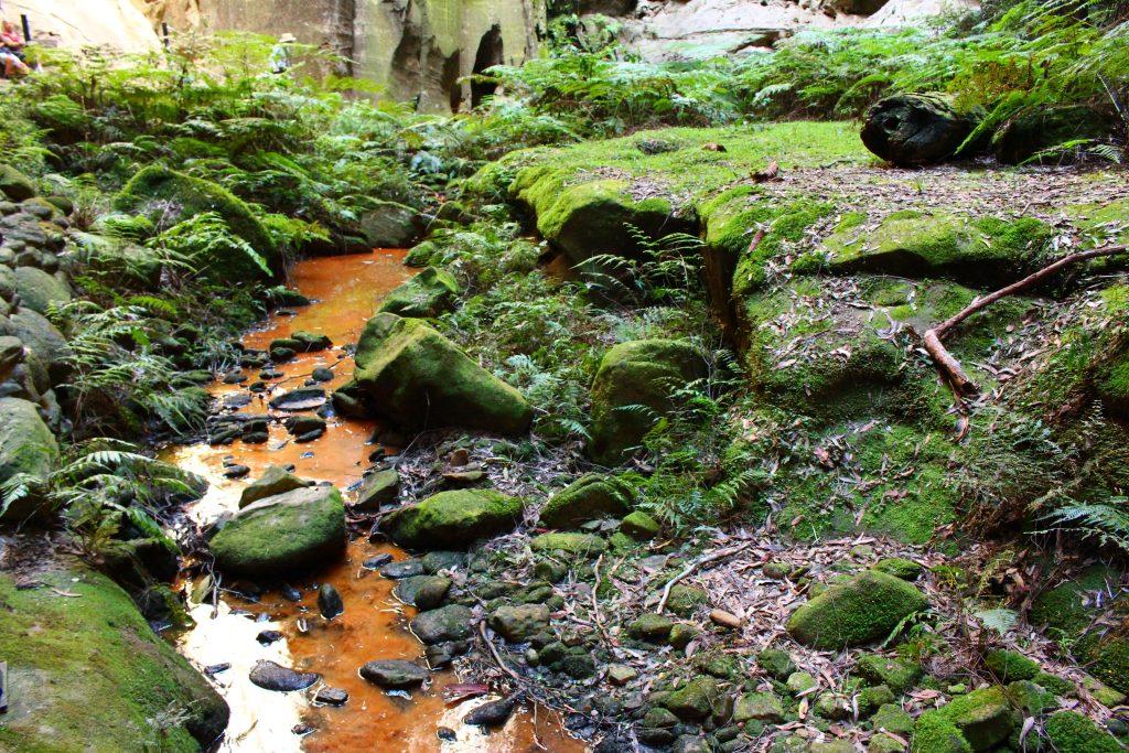 Carnavon Gorge Australie (3)
