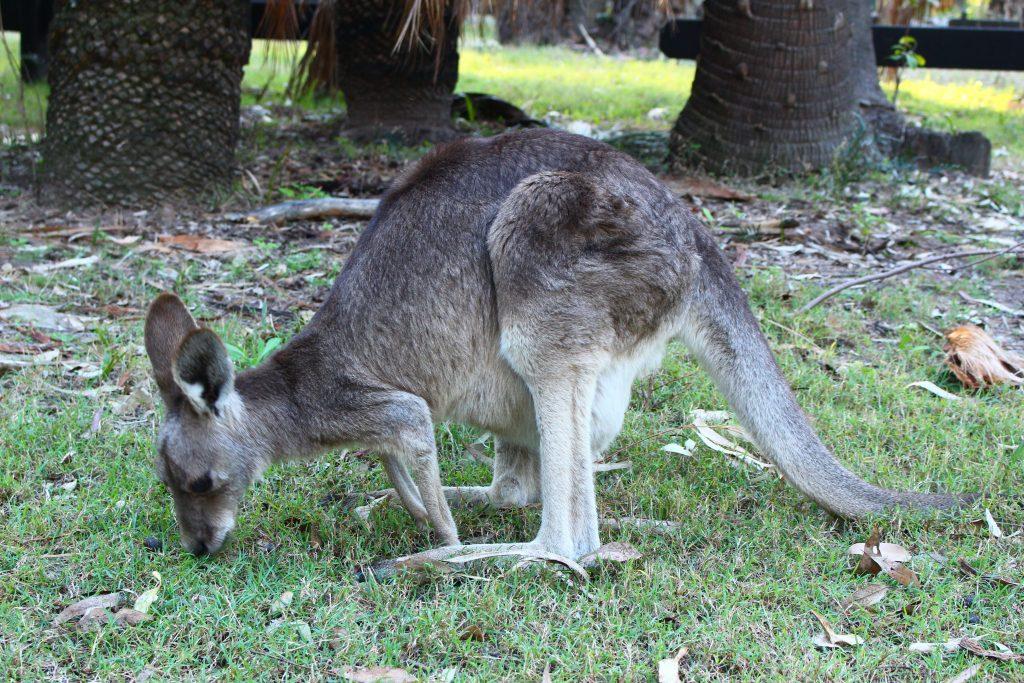 Carnavon Gorge Australie (6)