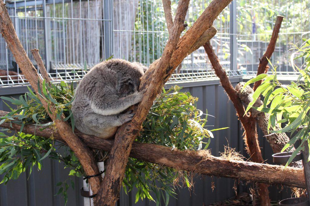 oala Hospital Port Macquarie