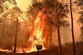 incendies Australie